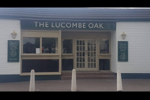 The Lucombe Oak, Exeter